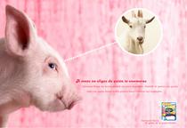 Cerdo y queso.doc cv