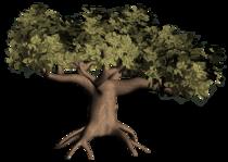 Tl oaktree 0609 cv
