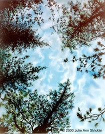 Trees cv