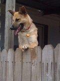 Hounddog cv