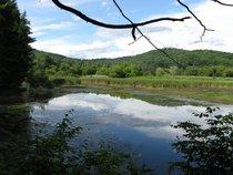 Vermont pond cv