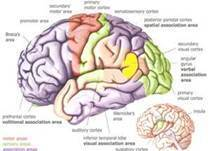 Brain map cv
