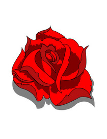 Rose cv