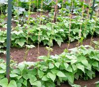 Beansgarden 200 cv