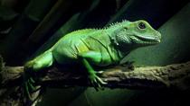 Lizard photo cv
