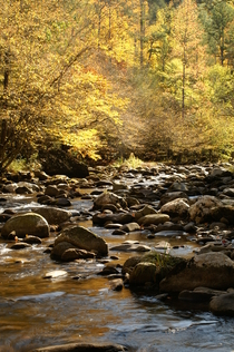 Smoky mountains creek cv