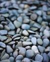 Rocks cv