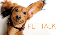 Heading.pet talk cv