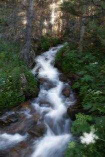 Creek cv