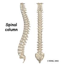 Spine cv