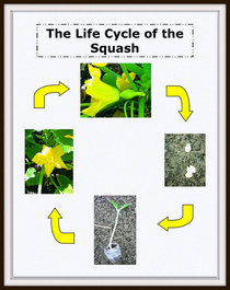 Plant life cycle image format2 cv