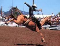 Rodeo cv