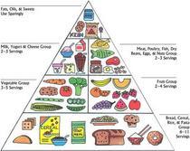 Food pyramid cv
