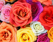 Flowers wallpapers love blooms roses bunch of flowers cv
