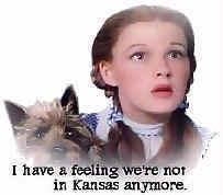 Dorothy cv