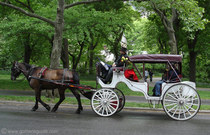 Nyc carriage horse cv