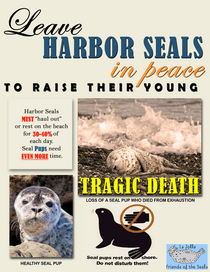 Leave harbor seals in peace final cv