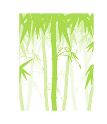 Bamboo with canopy cv