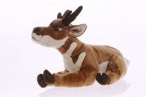 Pronghorn antelope 1  cv
