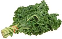 Kale cv