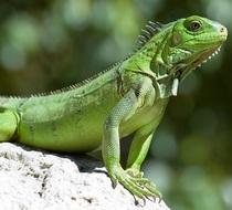 Reptile cv