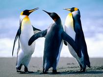 Penguins cv