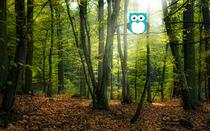 01 29 13 owl in tree cv