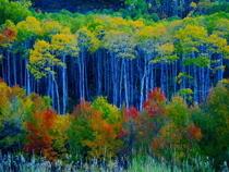 Fall aspens 2005 34 cv