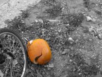 Pumpkin2 cv