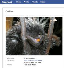 Quillan   facebook cv