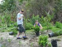 Plantingprojectindianriver cv