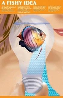 Cainecolorfish redo cv