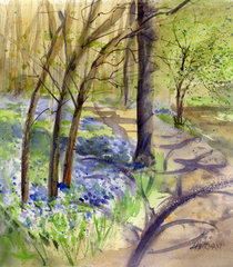 Bluebells morning s cv