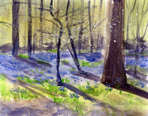 Bluebells afternoon s cv
