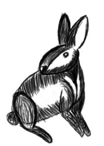 Rabbit study cv
