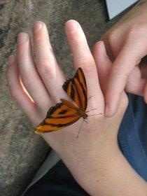 Handbutterfly cv