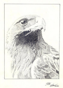Eagle  dots cv