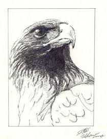 Eagle  lines cv