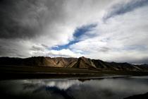 Tibet cv