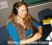 Shirley on radio cv
