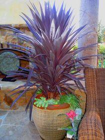 Shirley bovshow patio garden cv