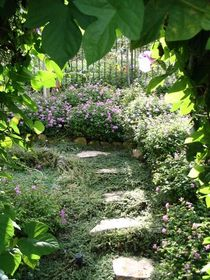 Shirley s garden cv