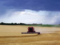 Harvest1 cv