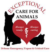 Exceptional Care For Animals